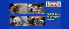 Videoblog: Das große Geschäft mit Welpen und Zuchthunden aus Ost- und Südosteuropa Dogs, Animals, Puppys, Pet Dogs, Animales, Animaux, Doggies, Animal, Animais