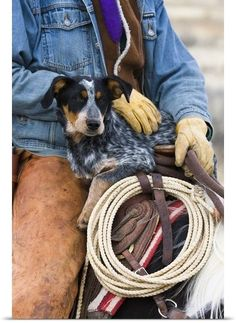 Cowboy sitting on a horse holding his Blue heeler dog Australian Cattledog close-up autumn. Multiple sizes available. Primary colors within this image include Dark Purple Dark Gray Silver Gray Blue. | eBay!