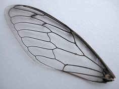 Insect wing to carve into porcelain?