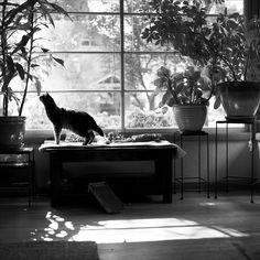 big window and plants