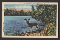 Out in the Open ADIRONDACK MOUNTAINS NEW YORK NY Postcard Linen Curt Teich
