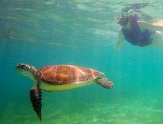 Neu im Blog: 11 Things to do in Mexico. Von Traumstränden, Schwimmen mit Schildkröten, Maya-Ruinen und dem Besuch bei einer Maya-Familie. http://www.travelontoast.de/2013/06/11-things-to-do-in-mexico/ #tastemexico