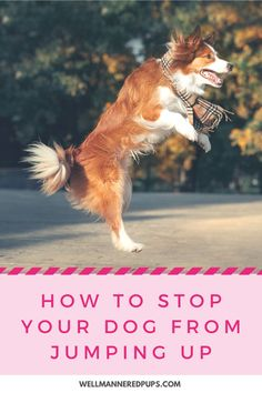 How to Stop Your Dog from Jumping Up On You and Others - Well Mannered Pups Dog Training Techniques, Dog Training Tips, Non Shedding Dog Breeds, Dog Treat Container, Dog Crate, New Puppy, Dog Owners, Dog Toys, Pet Care