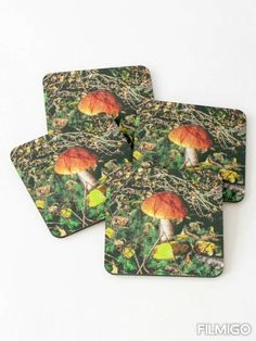 Perfect Image, Perfect Photo, Love Photos, Cool Pictures, Sweet Home, Autumn Forest, Coaster Set, Decoration, Stuffed Mushrooms