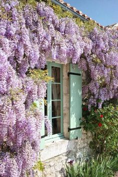 Wisteria covered house in the French country side