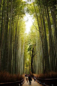 Path of Bamboo in Arashiyama, Kyoto, Japan