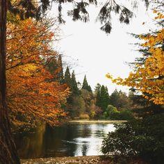 Laurelhurst Park. Nov 2016