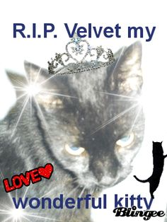 my poor kitty past.. :'( she was so beautiful.. :'(