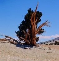 Inyo National Forest - Special Places