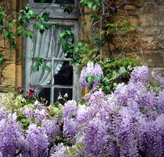Love this!  Wisteria are such a beauty and smell so good.