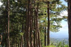 EXPLORING THE TRANQUIL LANDSCAPE OF BUCARI – lakwatserongdoctor Exploring, Landscape, Plants, Scenery, Explore, Plant, Research, Corner Landscaping, Planets