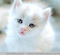 Sweet little kitty!!