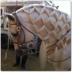 beautiful horse beautiful horse - Art Of Equitation Horse Mane Braids, Horse Hair Braiding, Cute Horses, Pretty Horses, Horse Photos, Horse Pictures, Funny Pictures, Most Beautiful Horses, Animals Beautiful