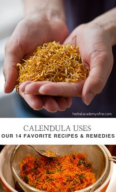 Herbal Medicine Calendula Uses- Our 14 Favorite Recipes and Remedies - The Herbal Academy - Calendula is perhaps most commonly known as a remedy for cuts and good for the skin. There are so many calendula uses, but here we share our 14 favorites! Healing Herbs, Medicinal Herbs, Natural Healing, Natural Oil, Holistic Healing, Natural Home Remedies, Herbal Remedies, Health Remedies, Cold Remedies