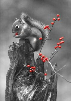 Hight and red by Andre Villeneuve