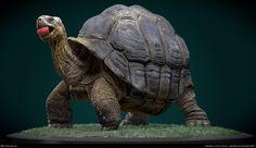 Galapagos Giant Tortoise by Eoin Cannon Reptiles, Amphibians, Tortoise Tattoo, Russian Tortoise, Giant Tortoise, Lion Wallpaper, Pokemon, Pet News, Tortoises