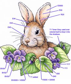 Bunny coloring guide by Judi Maddigan  from Angels Landing