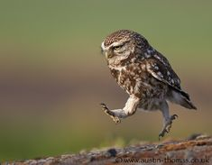 "This owl is on a mission. And this photo is just waiting for a hilarious caption... Add your caption idea in the comments! | (500px / Photo ""Totally Run Off My Feet..."" by Austin Thomas)"