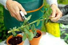 Best Indoor Garden Ideas for 2020 - Modern Weed Seeds, Different Vegetables, Plants Online, Back Gardens, Growing Plants, Fruit Trees, Hedges, Organic Recipes, Horticulture