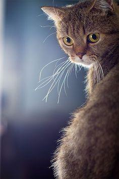 ANSEY Cats - katzen