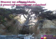 Encontre soluções. www.oficinadepsicologia.com #psicologia #psicoterapia
