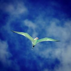 Fly me to the clouds Cool Instagram Pictures, Clouds, Bird, Animals, Animales, Animaux, Birds, Animal, Birdwatching
