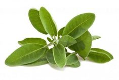 Sage is an herb that is commonly used in the hair care industry to help prevent and stop hair loss. Sage essential oil stimulates the blood flow. Hair Care Recipes, Sage Essential Oil, Diy Hair Care, Stop Hair Loss, Smudge Sticks, Hair Conditioner, Medicinal Plants, Grow Hair, Natural Oils