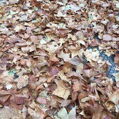 Cores e texturas do inverno em Santiago, Chile