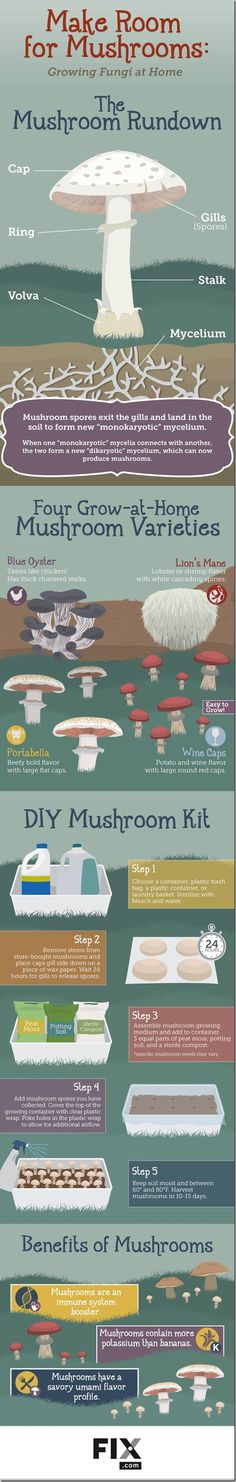 [Infographic] Growing Mushrooms at Home — RobynsOnlineWorld.com
