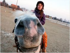 may I eat it ? Cute Little Girls, Cow, Horses, Animals, Animales, Animaux, Cattle, Animal, Animais