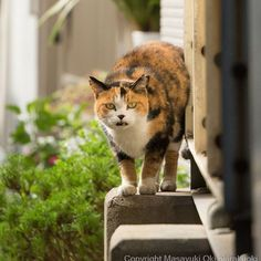高いところに登ってアピールを。 #cat #ねこ