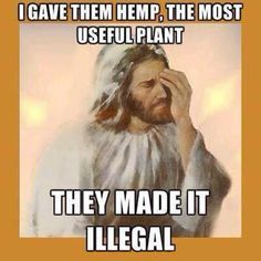 God made hemp and cannabis. I trust God! Weed Quotes, Weed Memes, Weed Humor, Funny Quotes, Funny Memes, Jokes, Hilarious, Funny Shit, Ghetto Funny