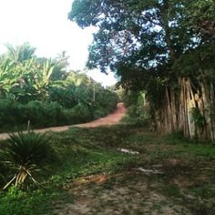 https://flic.kr/p/wUuyK9   Country roads, take me home...  #axixa #maranhao #brasil #Brazil_Repost #brazil #nordeste #nordestebrasileiro #countryroad