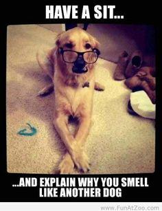 "Funny dog meme ""..... I can explain!"""