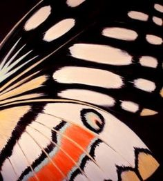 """""""Butterfly"""" by Kirstin MCCoy. An impressive bold yet colourful original abstract painting inspired by nature.  Bring the outdoors inside and add a contemporary feel to your home interiors and decor. View the full collection on FineArtSeen l The Home Of Original Art. << Pin For Later >>"""
