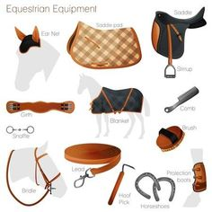 Horse Riding Tips, Horse Tips, Equestrian Outfits, Equestrian Style, Equestrian Problems, Horse Saddles, Horse Bridle, Western Saddles, Horse Halters