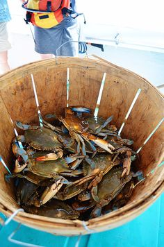 Blue Crab in Basket