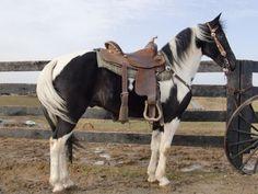 408 Best Love Images On Pinterest Beautiful Horses Pretty Horses