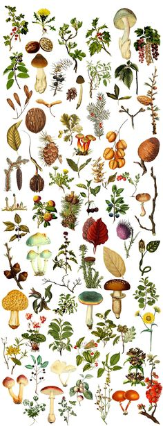 Field & Forest Vintage Botanicals Graphics This is a carefully curated collection of 75 vintage botanical graphics of leaves, branches, berries by Eclectic Anthology Art And Illustration, Illustrations, Vintage Botanical Illustration, Watercolor And Ink, Watercolor Paintings, Cs6 Photoshop, Creative Sketches, Grafik Design, Botanical Prints