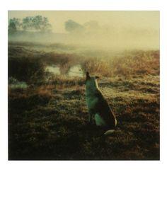 Andrei Tarkovsky Polaroids 4