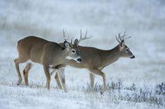 3 Things to Do This Off-Season | Deer Hunting | Realtree Camo