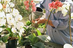 Орхидеи – это неприхотливые растения, которые, по сравнению со многими другими цветами, не требуют специального ухода. Зная особенности годового цикла орхидей, вы сможете правильно за ними ухаживать.…