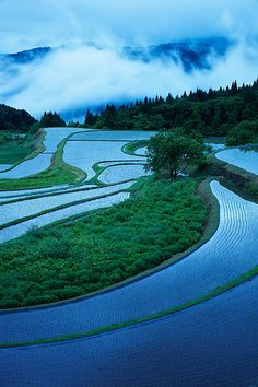 Spring rice fields, Japan