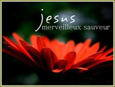 Jesus Beautiful Savior Free Tulip Wallpaper Flowers The post Latest Flower Wallpaper For Mobile appeared first on Share Online Jesus Wallpaper, Hd Flower Wallpaper, Hd Wallpaper, Wallpaper Pictures, Free Christian Wallpaper, Christian Backgrounds, Worship Backgrounds, Savior, Jesus Christ