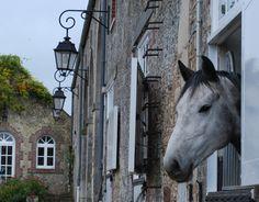 Nearest neighbour! ( our gorgeous stallion Continuum)