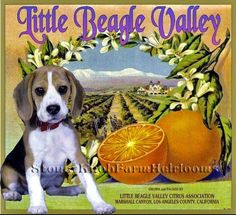 Little Beagle Valley Citrus ~ Vintage Crate Label ~ Cross Stitch Pattern #StoneyKnobFarmHeirlooms #Frame