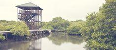 Hutan Mangrove Bali. rekan deBalier pasti banyak yang belum pernah ke hutan mangrove Bali kaann? asik lho tempatnya, kita bisa melihat hutan ini dengan cara yang berbeda, menyusuri hutannya lewat jembatan indah, kalian juga bisa foto-foto di sini, karena tempat ini sering di pakai untuk foto prewedding. yuk ke sini yuk, mengunjungi hutan mangrove bali dari dekat.