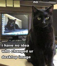 Black cats rock!!!