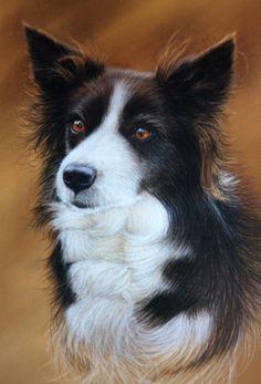 Border collie - Peter Skillen Pet Portraits