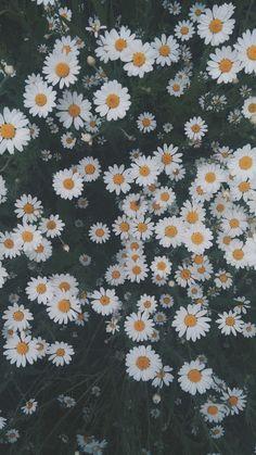 iphone wallpaper sunflower Ramones, summer is coming , warm, a good day Flower Iphone Wallpaper, Flowery Wallpaper, Sunflower Wallpaper, Butterfly Wallpaper, Aesthetic Pastel Wallpaper, Cute Wallpaper Backgrounds, Pretty Wallpapers, Nature Wallpaper, Aesthetic Wallpapers